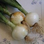 Onions, White Sweet