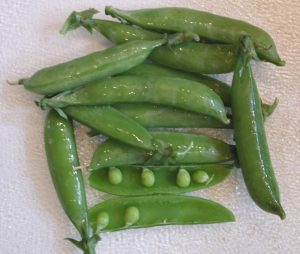 Peas, Snap (Edible Pod)