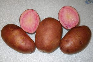Potatoes, Adirondack Red