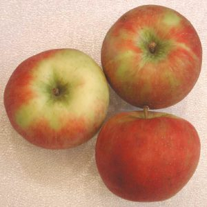 Apples, Honeycrisp