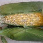 Corn on the Cob, Bicolor