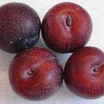 Plums, Red Spotted