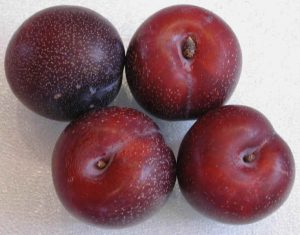 Plums Red Spotted